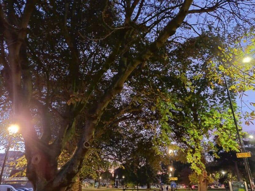 Пример-фотографии-OnePlus-6T-11-1024x767