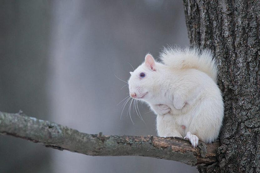 белая белка - пример фото скамеры