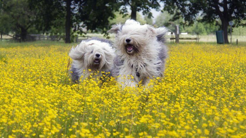 две собаки в поле